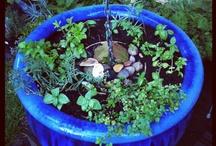 Favorite Places & Spaces / My garden, my neighbourhood