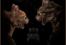 Krijgers katten