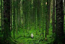 Images vertes / zen , nature,