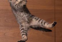 Jigen ( My Fun ) + gatti passati e randagi / Gatti che ho fotografato