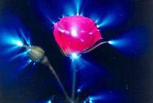 * Фотографии энергетического поля аппаратом кирлиана-Photography the apparatus of kirlian