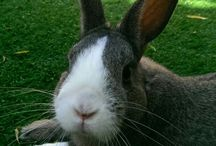 My Daughters Pet Rabbit
