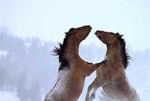 horsers