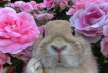 Obsessed with rabbits