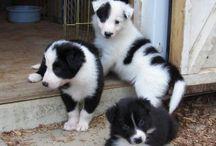 Cute animals! :)  / Pets
