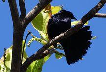 Uma Árvore e seus pássaros! / Fotos tiradas de pássaros tiradas em uma mesma árvore no meio da cidade de Londrina