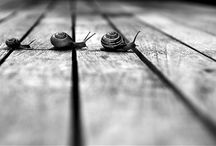 photography - black & white