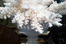 schelpen en koraal