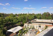 Roland Garros / Un Arbre à vent planté grâce au soutien de la Fondation Engie sur le site de la Fédération Française de Tennis