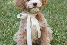 My New Pup!! / by Linda Gahan