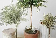    gardens - topiary love   