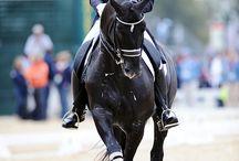 Hest-  Rytter etc