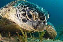 Черепахи * turtle *  tortoise
