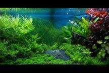 my aquarium / my aquarium