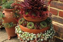 Container Gardening / Plants, pots and stunning combinations