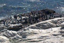 Stony Point Betty's Bay