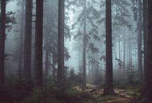 Vienna Forrest