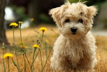 Too Cute / puppies and kittens and babies, oh my! / by Sandra Joy