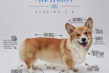 Doggie  Corgi