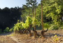4 seasons in Raventós i Blanc / Landscapes, vineyards and grapes during the 4 year seasons in our Estate