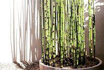 botanicals / plants I love / by Renee Ellen