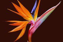 Favoriete bloemen