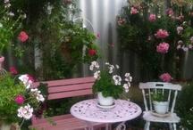Rosa i hagen