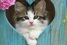 Sweet Animals