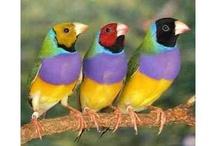 BIRDS / by Sarah Hurst