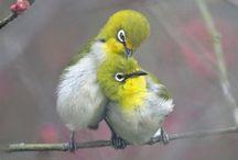 Birds 2 / by Patricia Stautihar