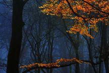deep autumn atmosphere