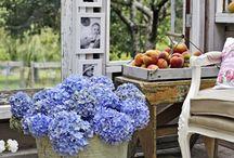 Flowers, Gardens and backyards