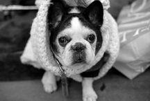 WHO LET THE DOGS OUT? / Hot for sausage dogs or fanatic about frenchies, we're always inspired by man's best friend