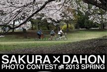 SAKURA×DAHON PHOTO CONTEST 2013 SPRING / 全国のDAHONユーザーさまがサイクリングの途中で見つけた素敵な景色。「桜とダホン」の写真募集に2013年春にご応募頂いた全作品です。募集要綱:http://enjoytheride.blog17.fc2.com/blog-entry-911.html