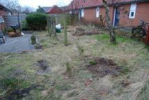 A starting garden