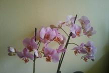 mijn orchideeen
