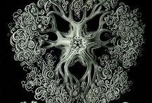 fractal/nature / fractals and nature