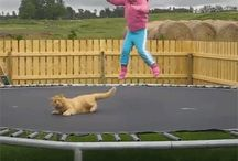 Follow children's interests / Support and cheer on children's efforts to jump. Make jumping fun!