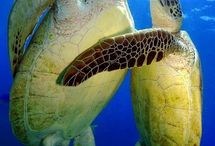 Tortues floride