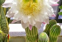 cactus and succulents / The most amazing flowers comes from the most unusual plants!