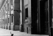 Leonard Freed / by Libanorojo