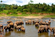 Places to visit in Sri Lanka / Although a tiny island, there are many places to visit in Sri Lanka. Sri Lanka is a paradise island of sandy beaches, mountains covered with miles and miles of tea plantations, plenty of wildlife and warm welcoming people.