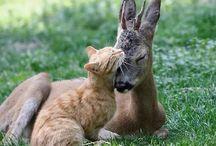 Amitié animaux