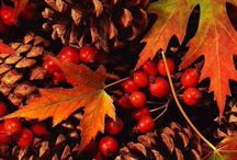 Amazing Autumn / The charm of autumn colors