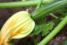 Közösségi Kertészkedés - Community Gardening