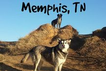 Traveling With Dogs / Find dog friendly places to stay at, and travel to with your dog!