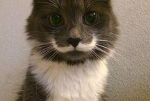 Villit viikset ruskealla kissalla!