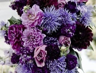 Purple / by Sonia Zavala