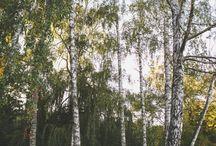 Fotograf Ślubny Śzczecin / Zdjęcia ślubne | Fotografia ślubna | Fotograf Szczecin | Fotograf ślubny | Fotograf ślubny Szczecin | Fotografia ślubna Szczecin | Sesja narzeczeńska | Sesje narzeczeńskie Szczecin