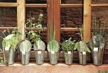 Jardinagem / Jardinagem em Apartamento